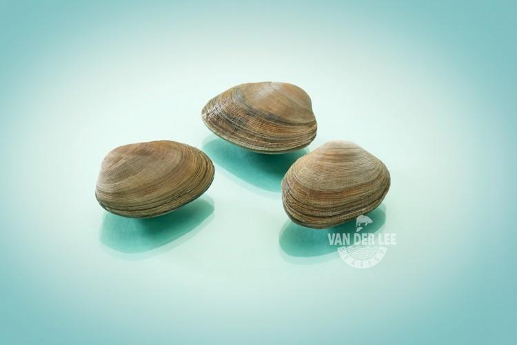 Carpet shell